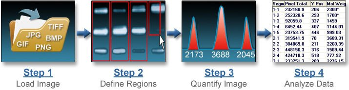 Electrophoresis Software Steps