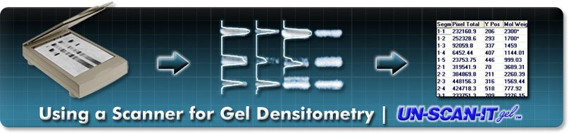 Using a Scanner for Gel Densitometry